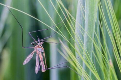 Sposób na komary – zwalcz szkodniki tymi 9 zapachami