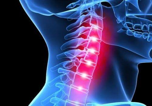 kręgosłup kręgi szyjne