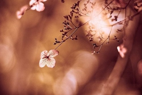 Kwiaty na krzewie