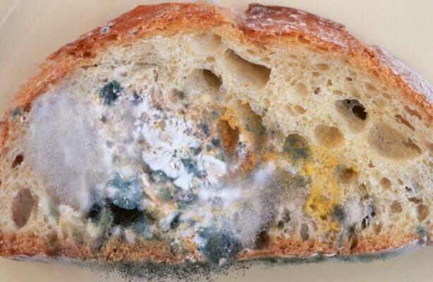 Chleb spleśniały