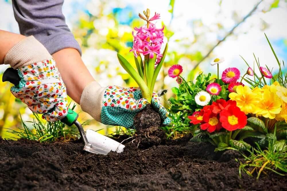 Sadzenie kwiatków rośliny w ogrodzie