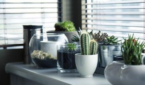 Sadzenie kaktusa – 5 różnych pomysłów