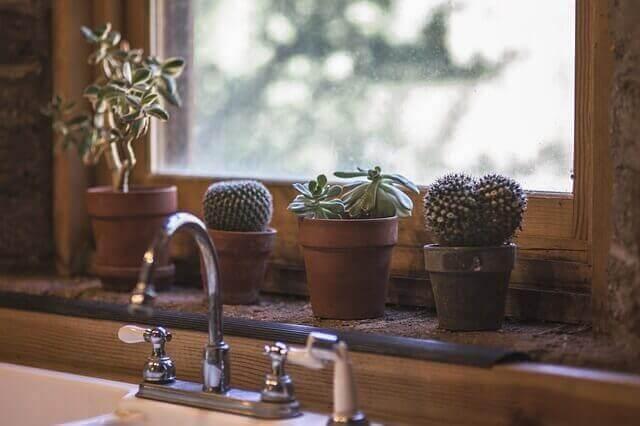 Kaktusy na oknie