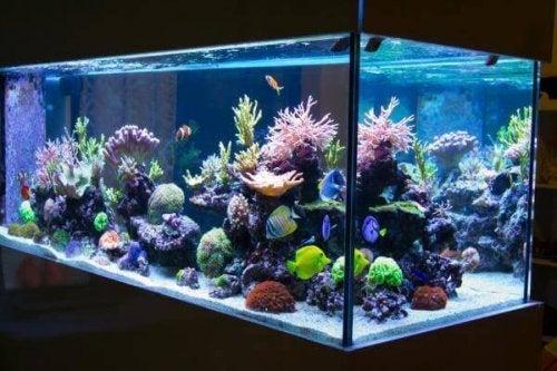 Wyczyszczone akwarium i rybki