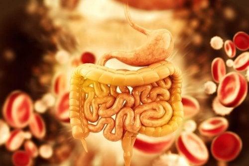 Detoksykacja okrężnicy – 5 skutecznych herbat