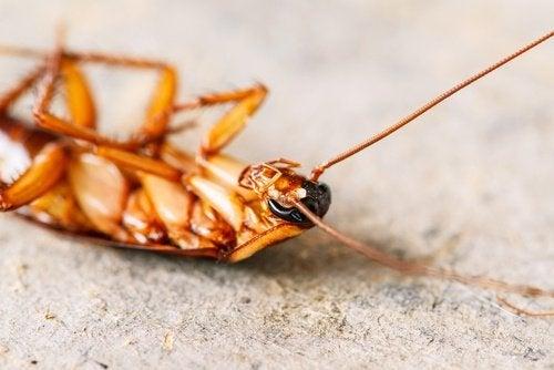 wywrócony karaluch