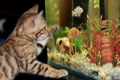 Czyszczenie akwarium - najlepsza metoda