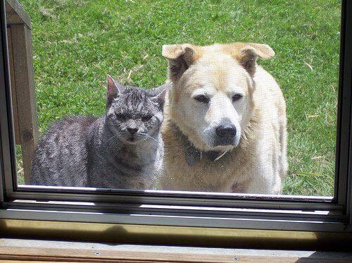 zwierzęta w domu pies i kot