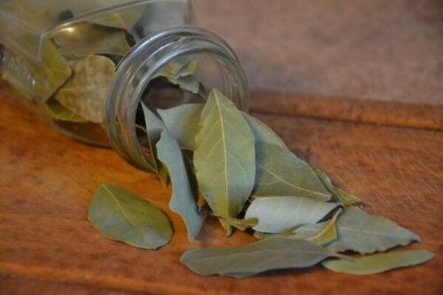 liście laurowe na karaluchy