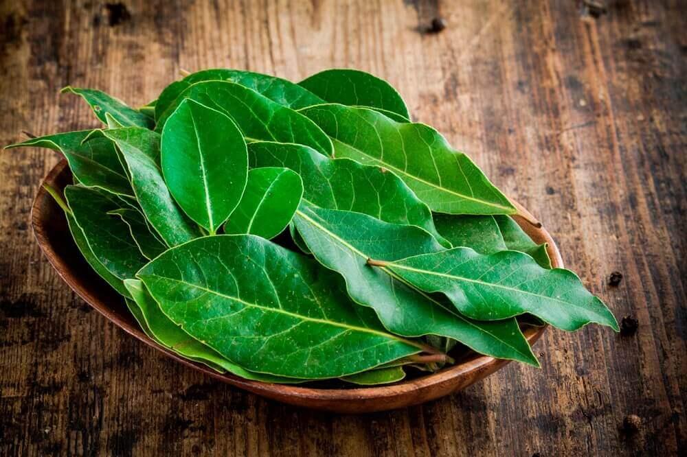 Świeże liście laurowe na flrgma