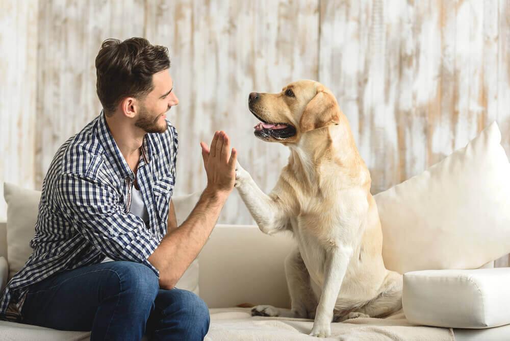 Mężczyzna z psem na kanapie