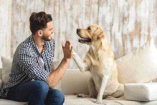 Zwierzęta w domu to prawdziwy skarb - zalety z ich posiadania