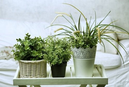 Rośliny przy łóżku
