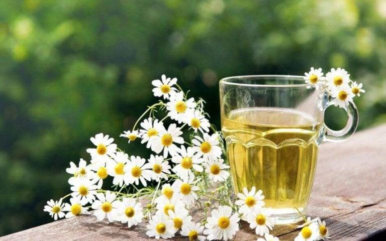 Lekarstwa z rumianku - remedium na wiele dolegliwości