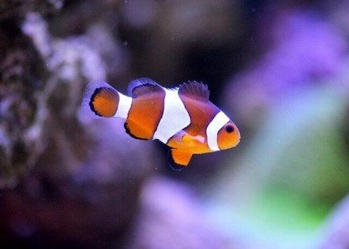 rybka w akwarium a czyszczenie kawarium