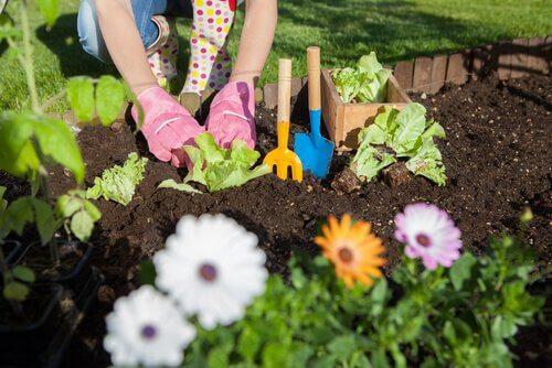 Ocet w ogrodzie – 7 form zastosowania