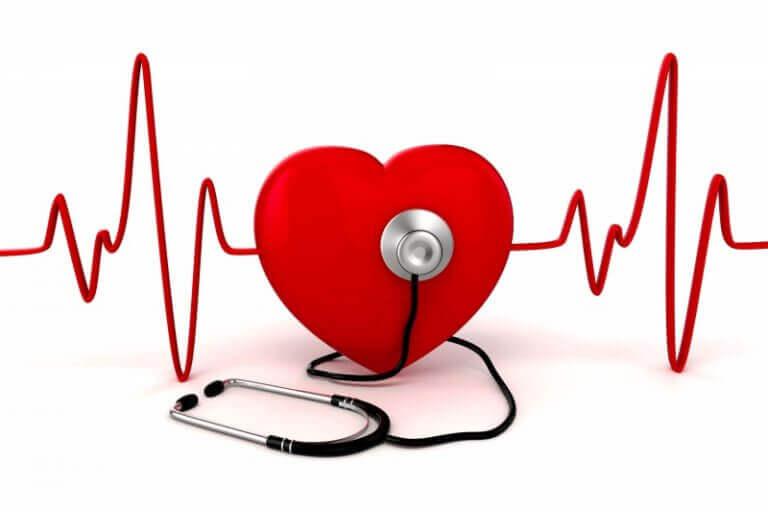 Układ krążenia serce puls