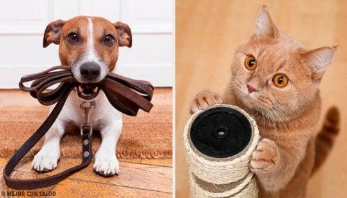 Zwierzęta domowe – czy zagrażają zdrowiu rodziny?