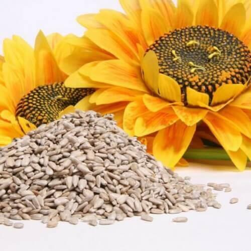 Kwiaty i nasiona słonecznika