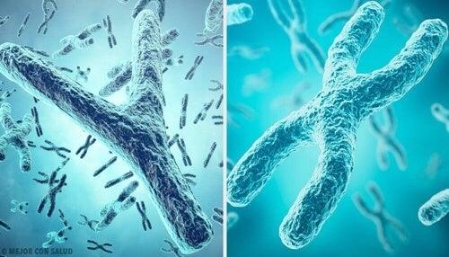 Determinacja płci – chromosomy X i Y