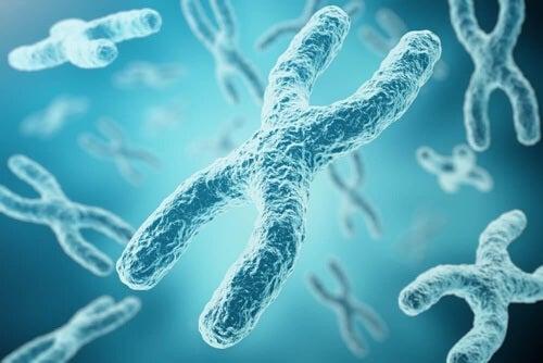Procesy dezaktywacji chromosomu mogą przebiec na 2 sposoby.