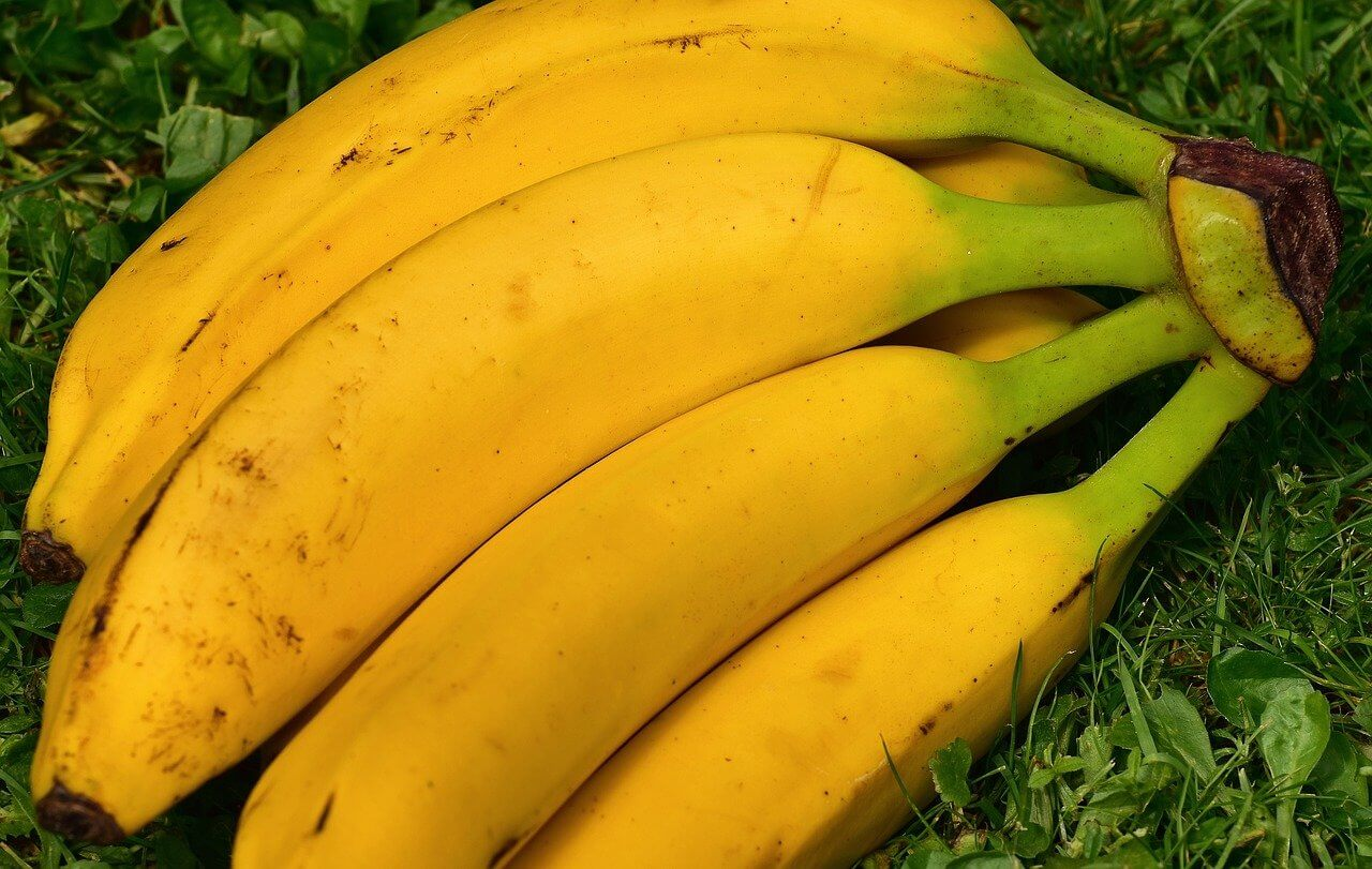 Kiść dojrzałych bananów