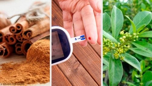 Leczenie cukrzycy roślinami – 5 najlepszych naparów