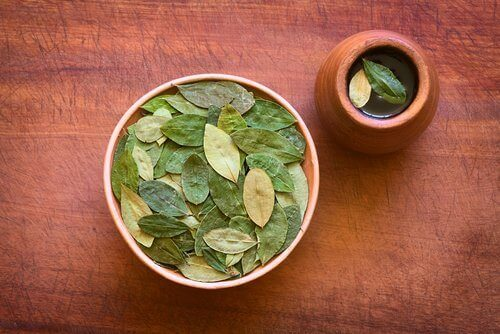 Napar z liści koki - poznaj jego zaskakujące właściwości