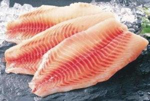 surowa ryba tilapia
