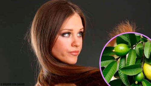 Ekstrakt z gujawy na zniszczone włosy i nie tylko
