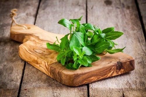 Świeżą bazylię możesz mieć zawsze pod ręką – hoduj ją w doniczce lub w ogródku!
