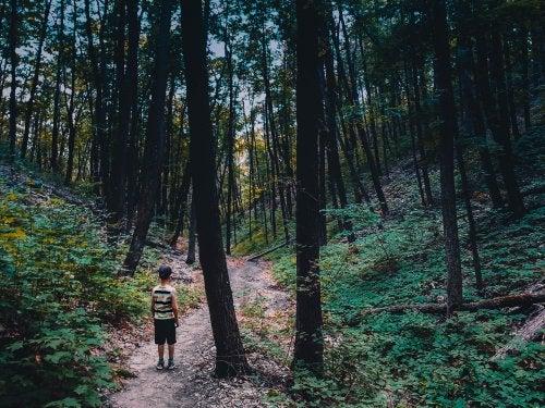 Gdy dziecko się zgubi w lesie