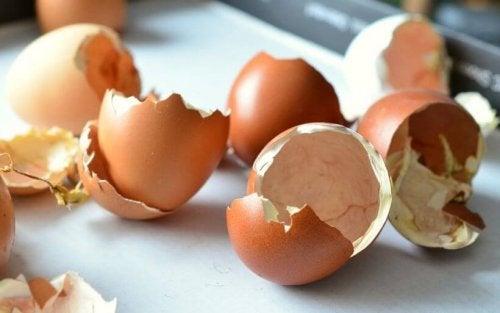 nawóz organiczny skorupki jajek