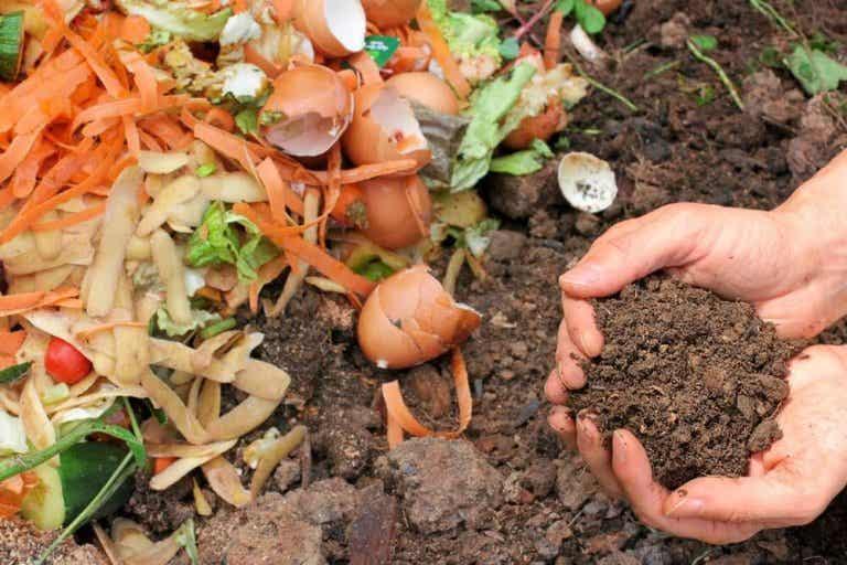 Nawóz organiczny - 5 rozwiązań dla Twoich roślin