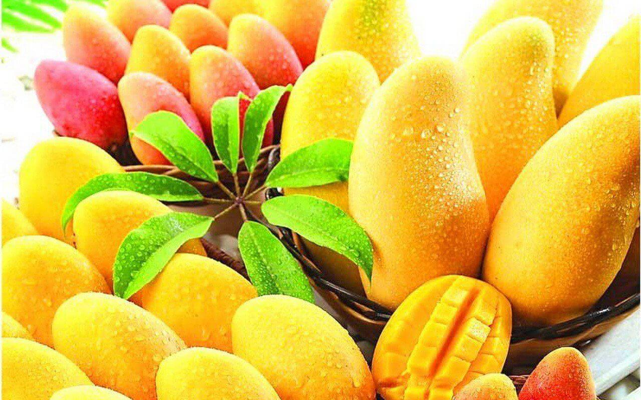 Owoce mango.