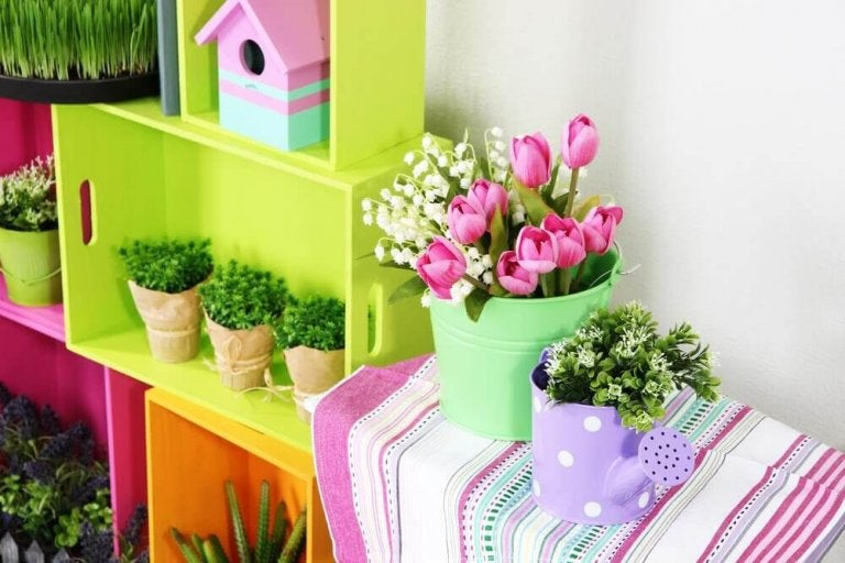 Kolorowe rośliny domowe.