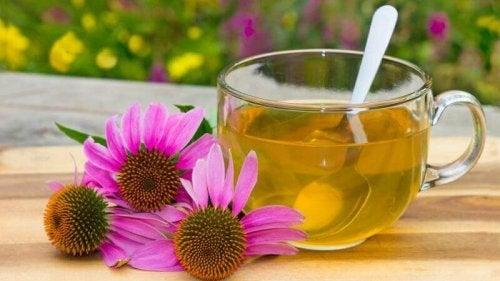 Herbaty ziołowe - jeżówka