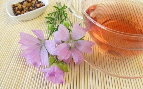 Ziołowe herbaty - malwa
