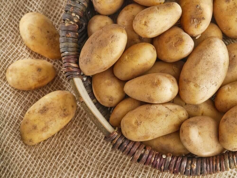 Kosz nieobranych ziemniaków