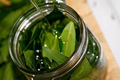 Olej z liści laurowych