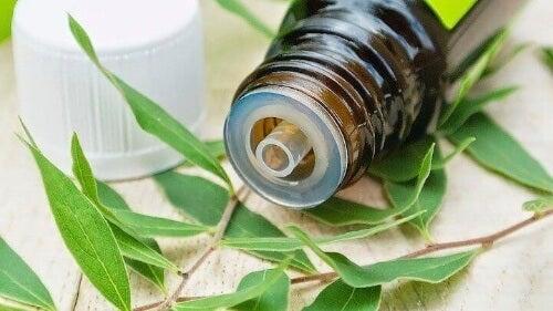 Olejek z drzewa herbacianego pomaga zwalczać różne rodzaje patogenów.