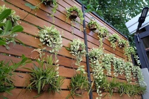 Pionowy ogród – 4 pomysły na przemianę zwykłej ściany