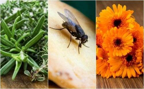 Domowe sposoby na muchy – poznaj je!