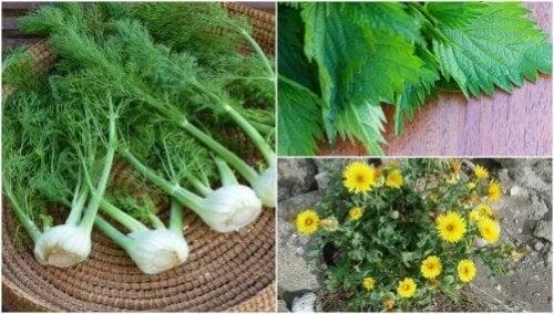 Rośliny jadalne - 8 takich, które Cię zaskoczą