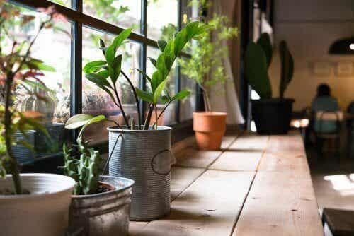 Rośliny w domu - jakie korzyści przynoszą dla Twojego zdrowia