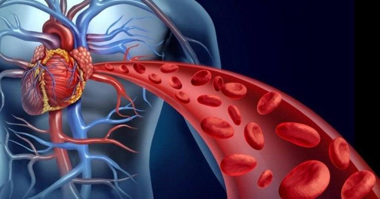 Naczynia krwionośne.