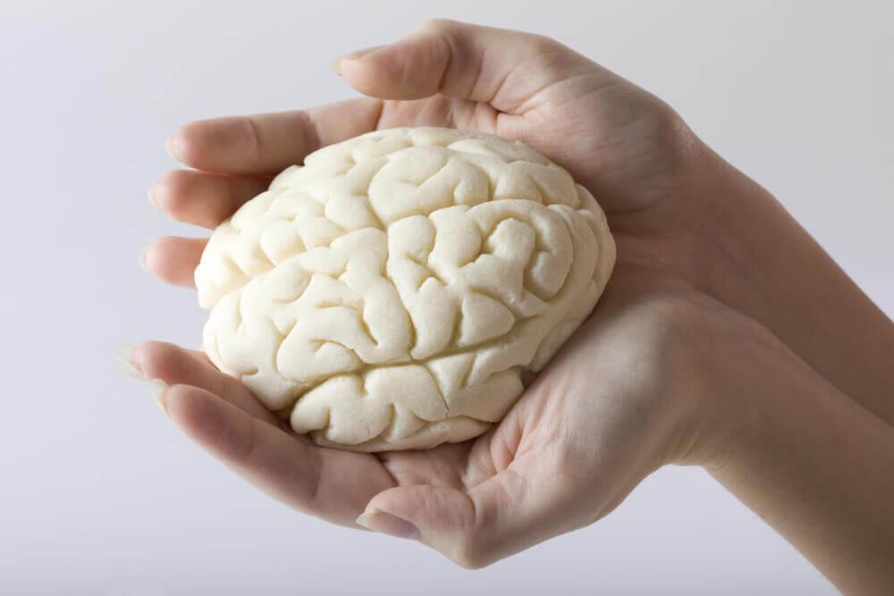 miniaturowy mózg