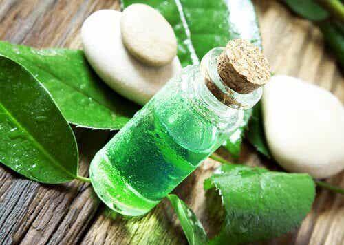 Olejek herbaciany do zwalczania pcheł i kleszczy
