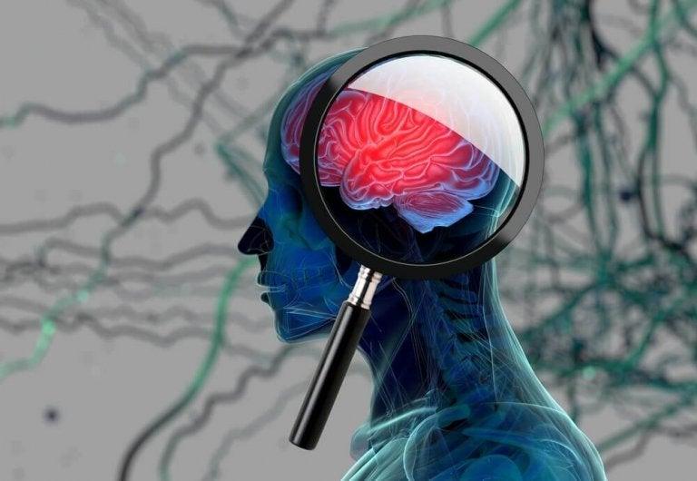 Lepsze działanie mózgu.