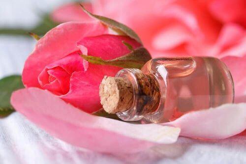 Wyciąg z róży